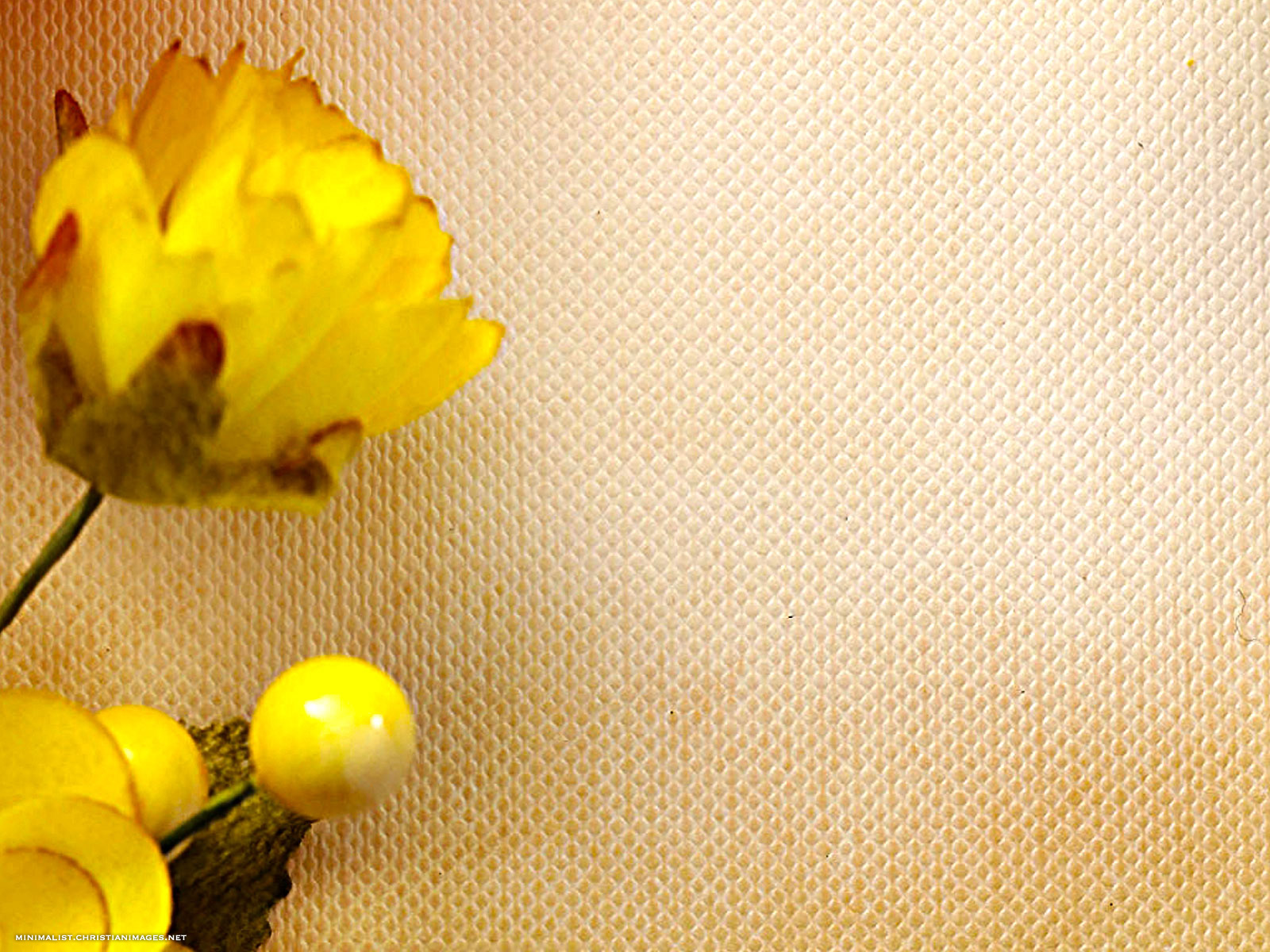 Celebration Yellow Flower And Paper Background