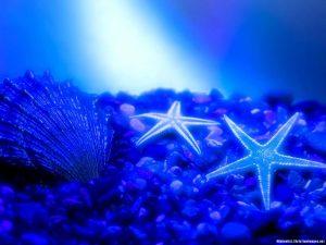 Seastar Deep Water Background