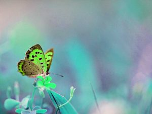 amazing-butterfly-background-for-powerpoint