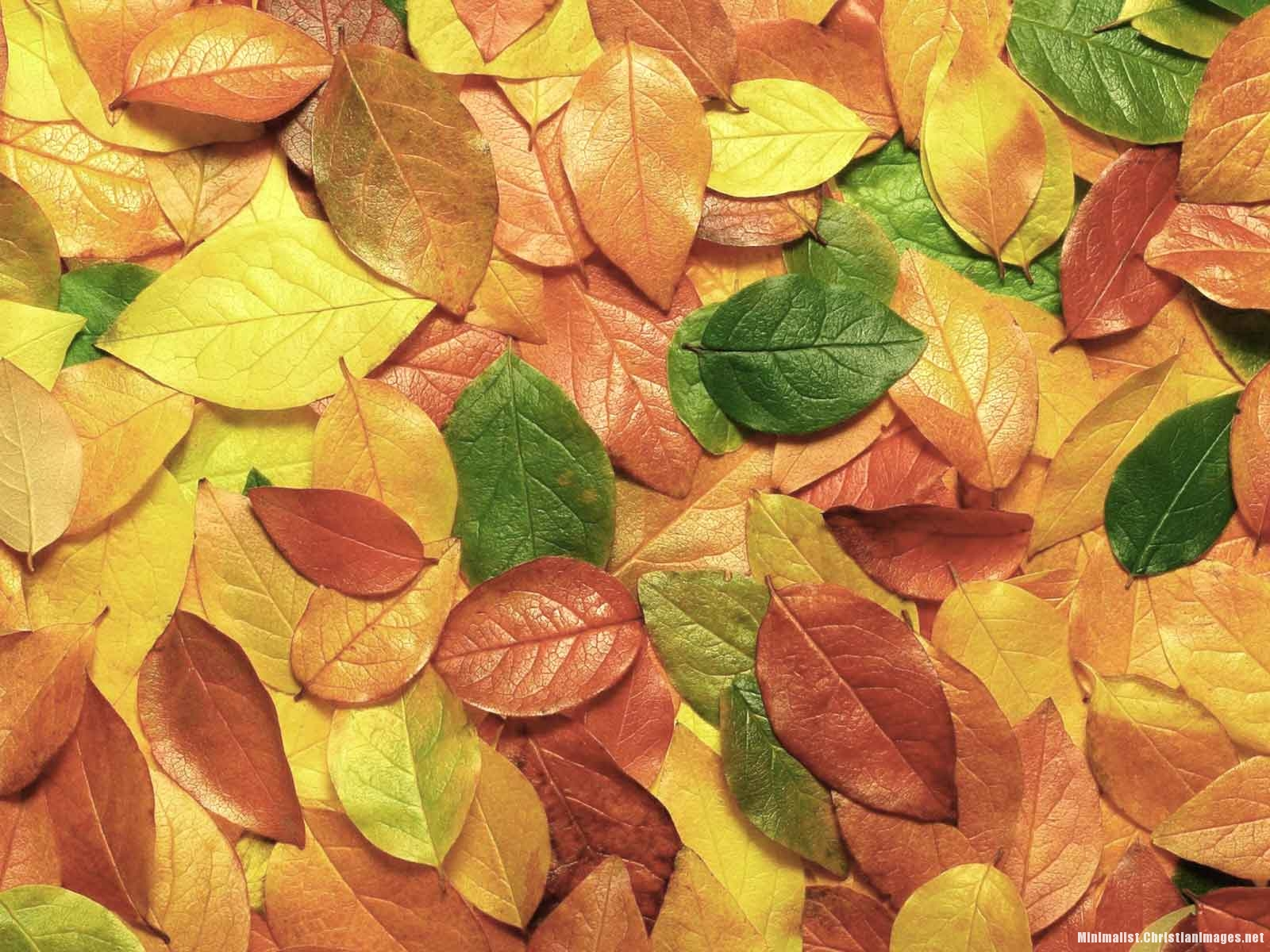 Autumn Leaves Powerpoint Background
