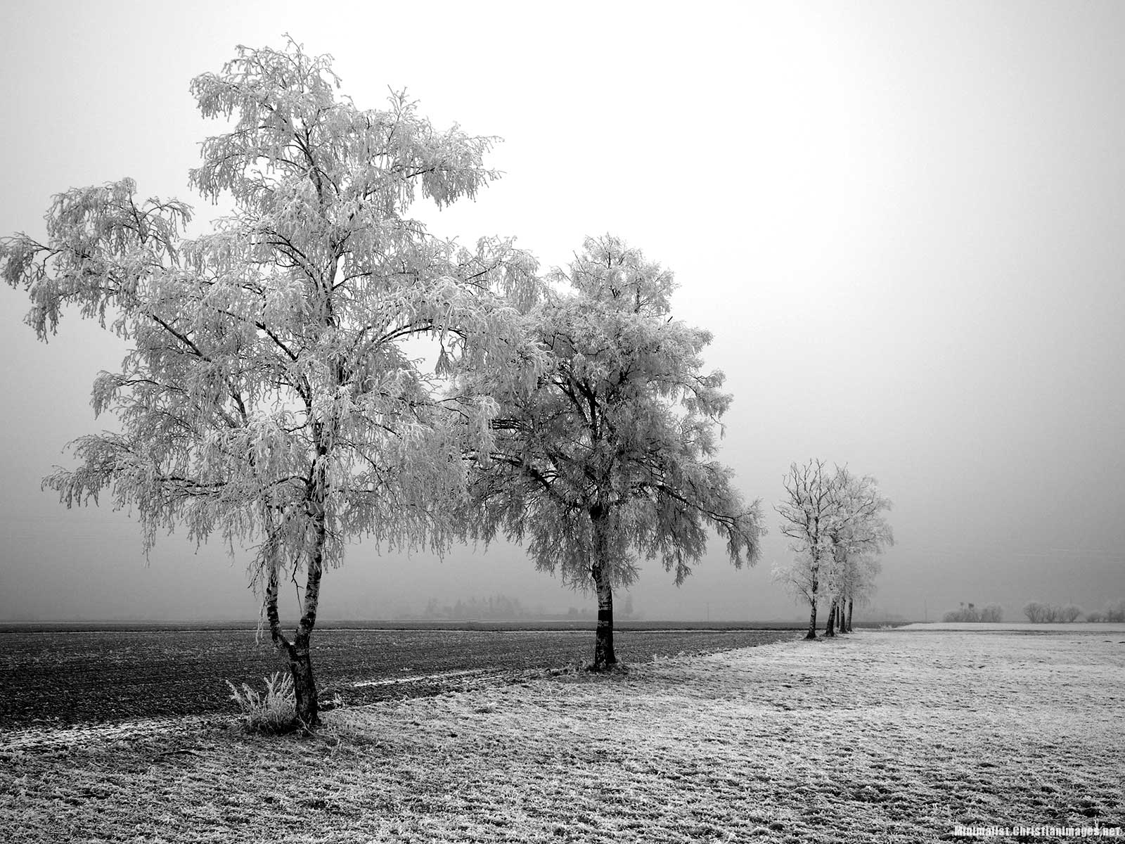 Black And White Trees Powerpoint Background