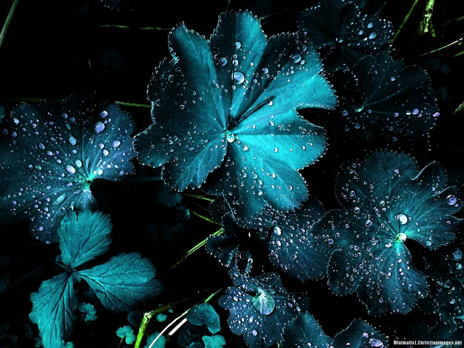 Blue Flower And Rain Drops Background for Powerpoint