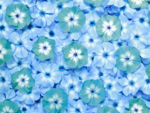 Blue Flower Powerpoint Background