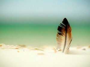 Brown Feather Powerpoint Background