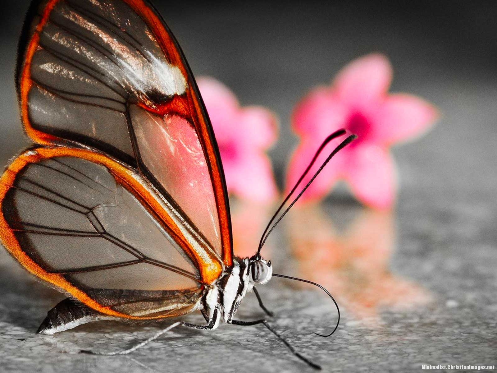 Butterfly Powerpoint Template