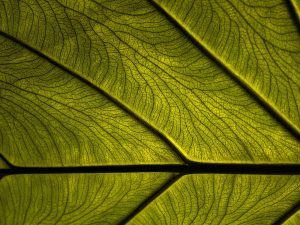 Close Up Green Leaves Powerpoint Background