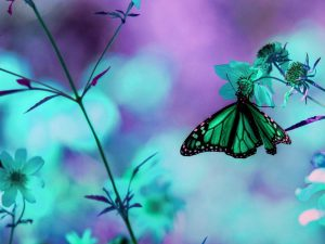 Super Awesome Butterfly Background