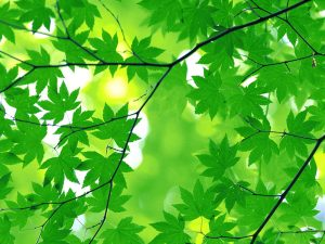 Tree Leaves Powerpoint Background