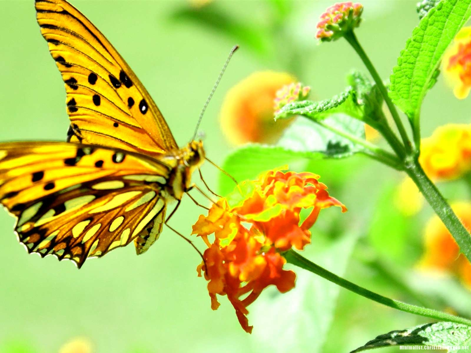 Yellow Butterfly Nature Background